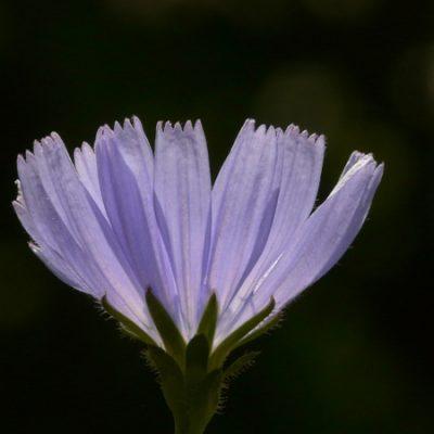 bilan fleurs de bach