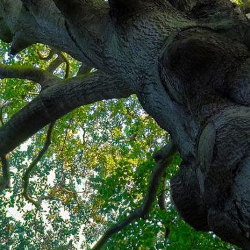 Découvrez la sylvothérapie : l'art du ressourcement en forêt.