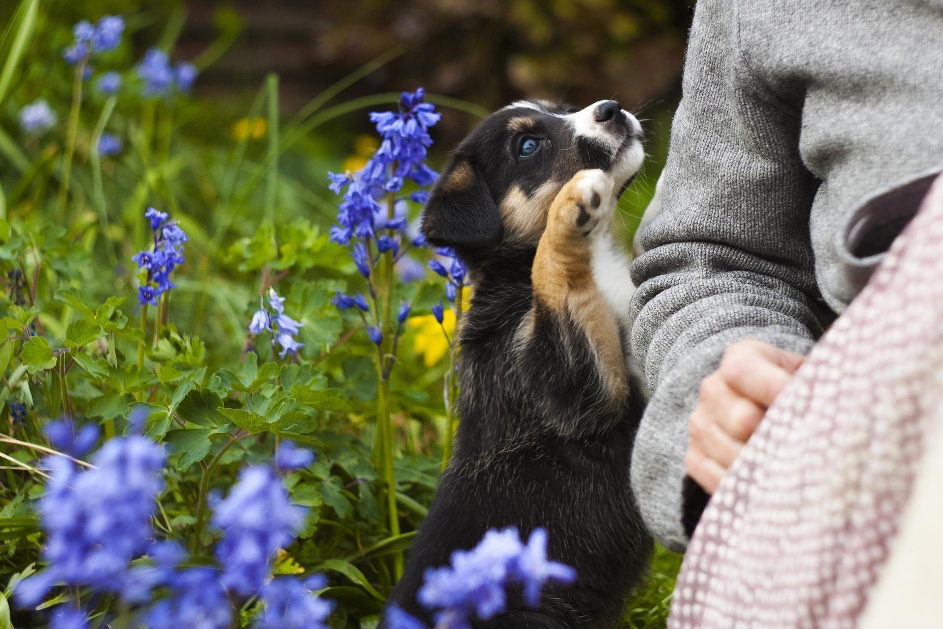 fleurs-de-bach-et-animaux-prele-loiseau-chevrier