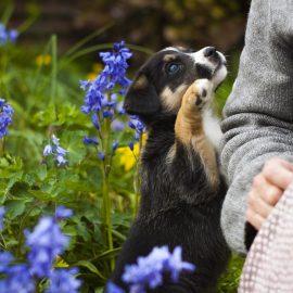 Les fleurs de Bach pour le bien être de nos animaux