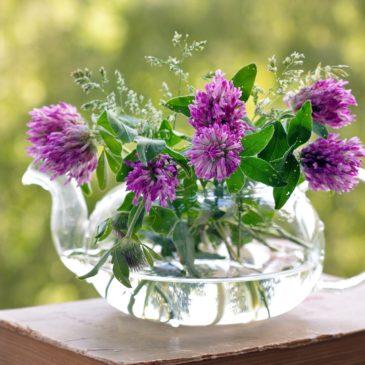 Sortie nature Fleurs de Bach